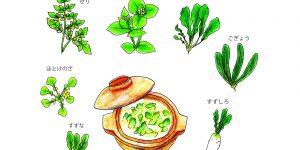 春の七草の、七草って何?-いつ食べるのか、何故食べるのか-