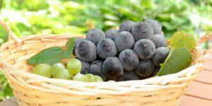 ぶどうの品種、種の有無や輸入/国産に分けて紹介!-定番物を厳選-