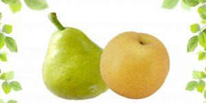 和梨と洋梨、何が違うの?-それぞれの主な品種は?-